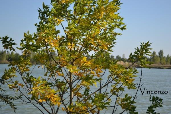 Bidot automne 065