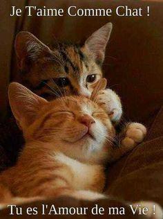 Belle image amour humoristique pleine de tendresse pour faire rire la personne qu'on aime