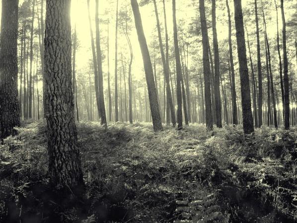 En forêt le 28novembre 2007