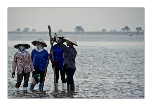 Nam Dinh 4- Retour des pêcheurs