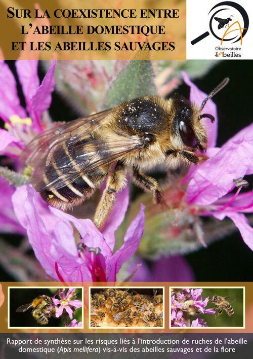 Sur la coexistence entre l'abeille domestique et les abeilles sauvages
