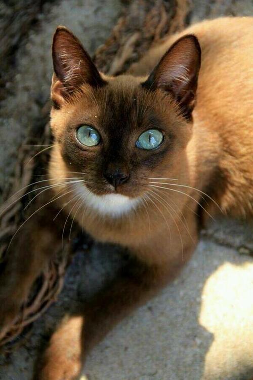 Un chat très reconnaissant