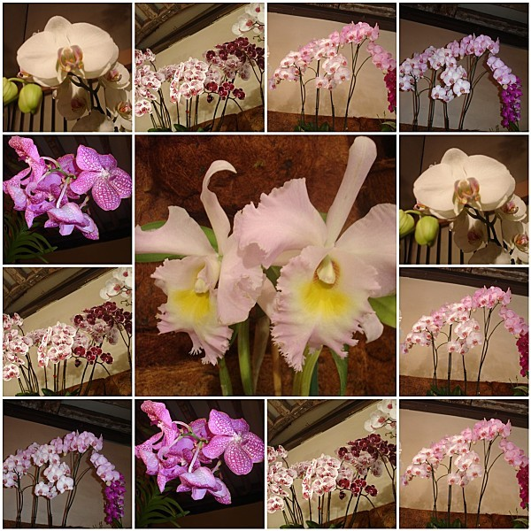 Orchidees---Courson-2011.jpg