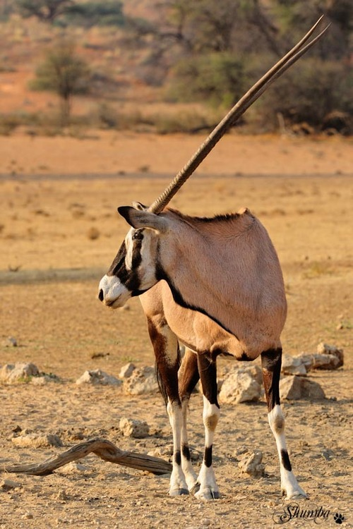 Kalahari classics, Kgalagadi NP