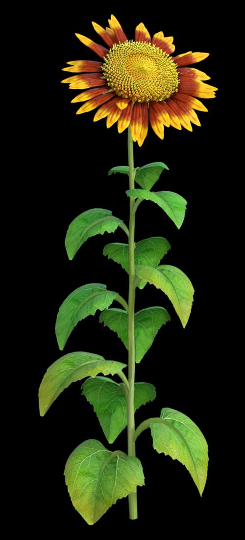 "Tube de ""tournesol"" bicolore (render-image)"