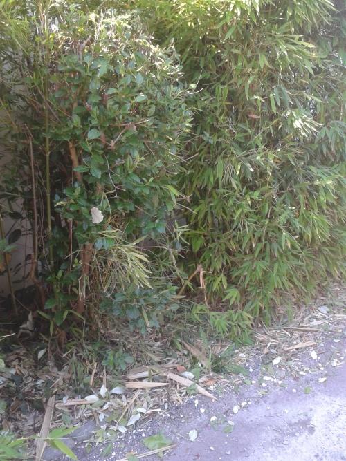 frelon asiatique et les jardiniers