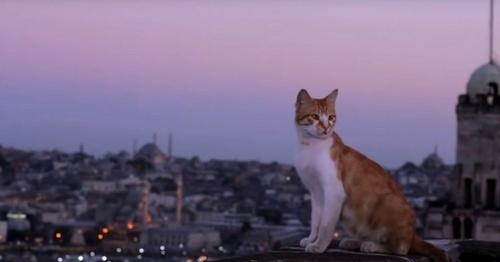 Le film Kedi, des chats et des hommes