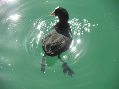 Au bord du lac d'Aiguebelette