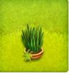 pot d'herbes ornementales