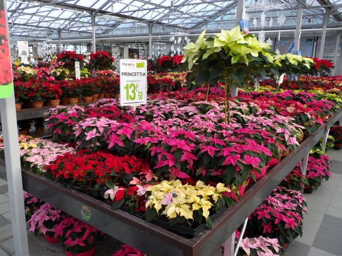 garden floralies