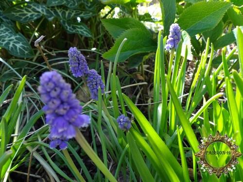 les fleurs du jardins