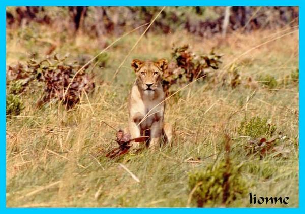 Parc national de l'Upemba:faune