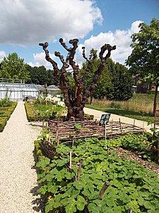 jardin des plantes d'Amiens (7)