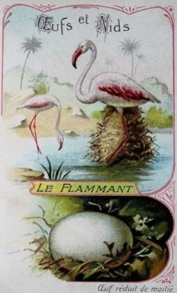 Le-Petit-Livre-des-Oiseaux-6.JPG
