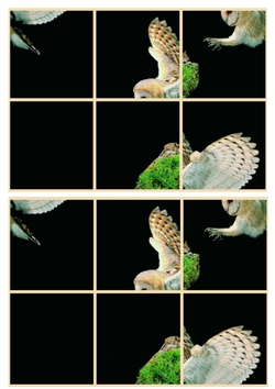 Le cahier des oiseaux