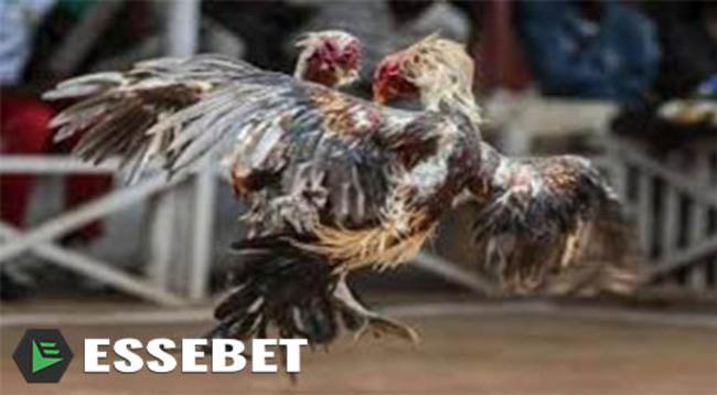 Situs S128 Sabung Ayam Pisau Online Terpercaya