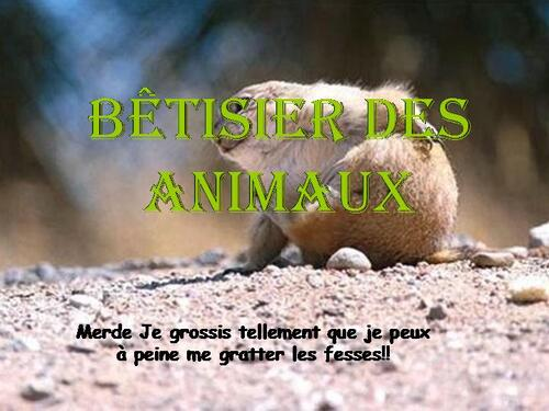 PPS ANIMAUX