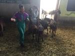 Diana et Mélanie au milieu des chèvres (aujourd'hui)