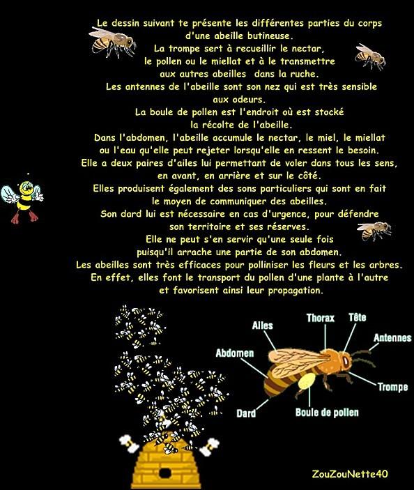 APICULTURE-abeille--N--3--.jpg