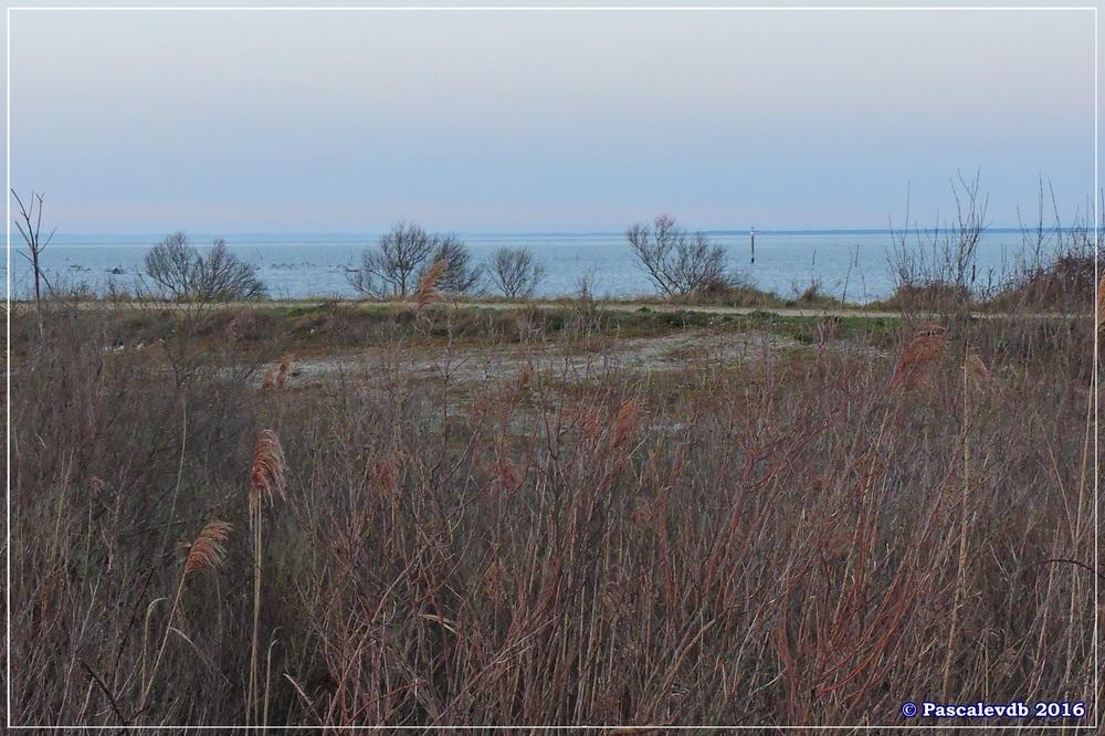 Port du Rocher et prés salés est - La Teste de Buch - Février 2016 - 12/12