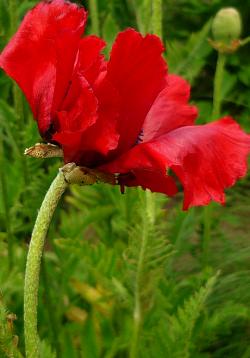 Tube fleur, tube pavot