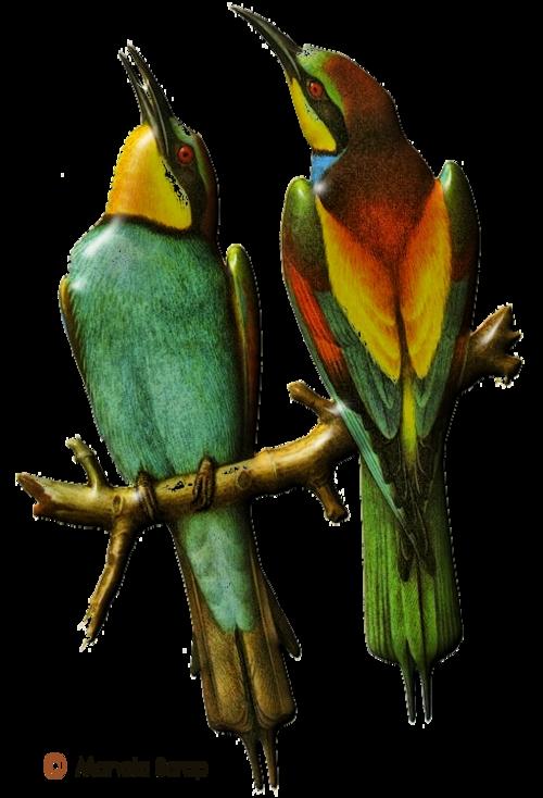 Tubes d'oiseaux en relief