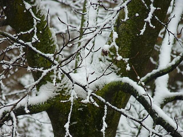 Neige à Metz 8 Marc de Metz 31 01 2012