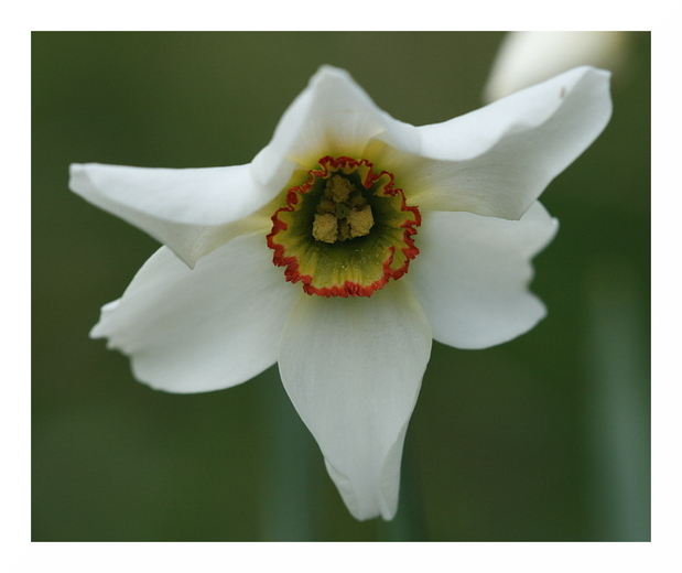 Rétrospective de mes photos de fleurs