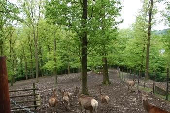 Parc animalier Bouillon 2013 enclos 189