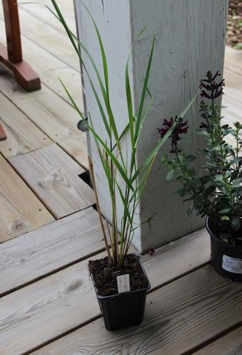 Journées des plantes de printemps - Aiguebelette