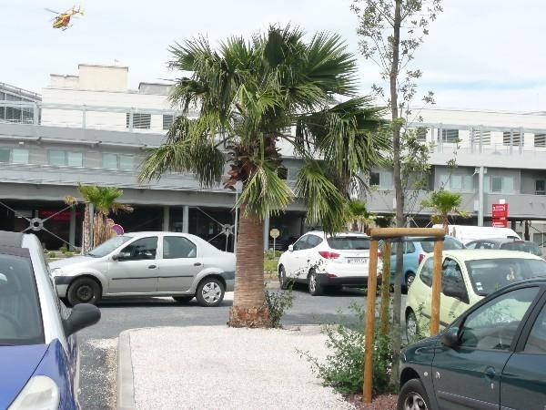 Perpignan-2013_19_palmier-de-gastro.JPG