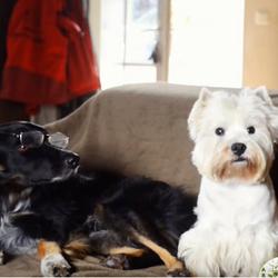 des chiens rejouent la pub nespresso