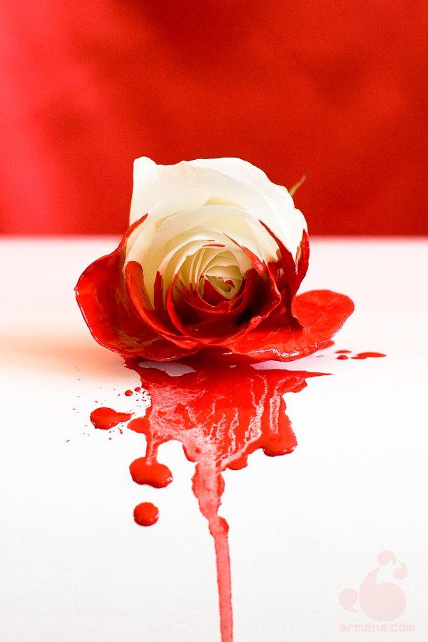 Rose Noir Il Est Difficile De Sourire Quand Le Coeur Pleure