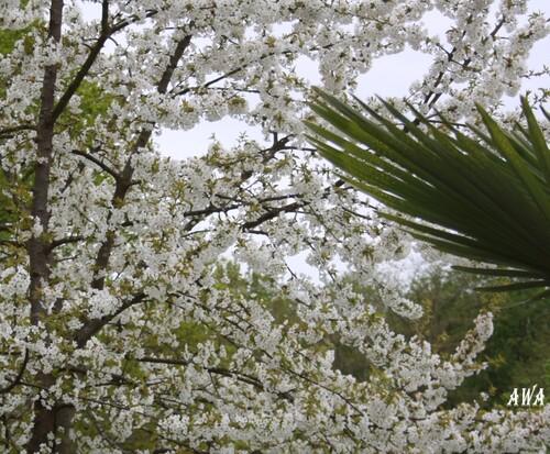 LA NATURE EN PLEINE FLORAISON