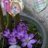 2002_0101petitcoeur0011.JPG