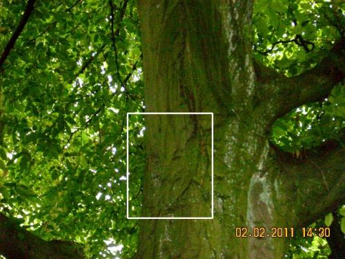 l'esprit d'un arbre