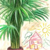 3 - Palmier d'Arec & Maison