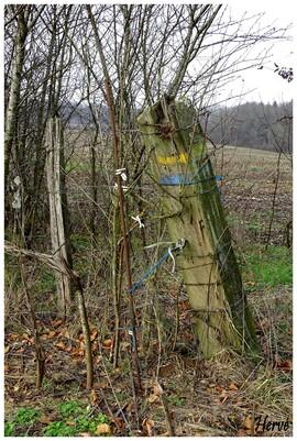 Randonnée: Le bois des Fouchères 1/2.