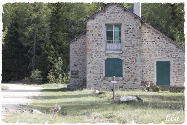_MG_1804-maison-forestiere.jpg