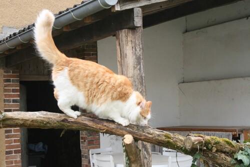 Arbre à chat ..