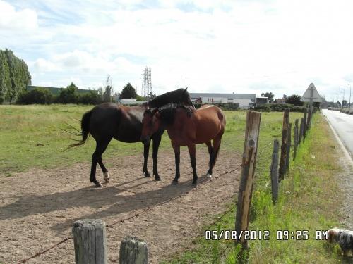 Quelques détails des chevaux