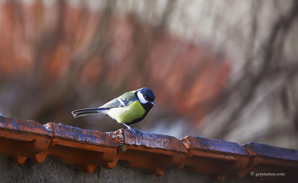 Retour avec les oiseaux