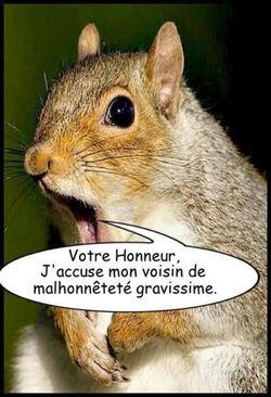 Les écureuils, en  justice!