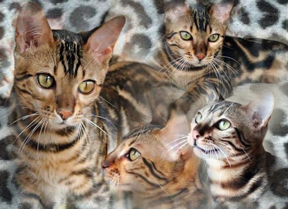 Idy OÌ' Dore8295753-bw-leopard-peau-arriere-plan-ou-la-texture-grande-resolution