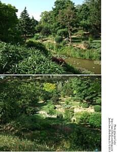 jardin zen 10