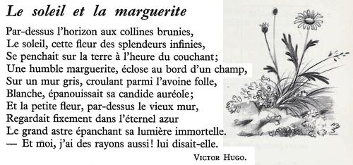 Le soleil et la marguerite (Victor Hugo)