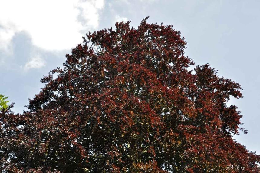 arbres-1516.jpg