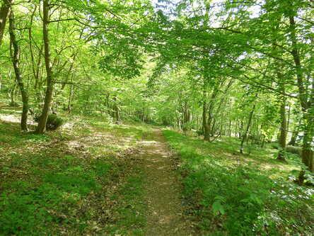 La forêt de Jumièges