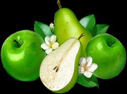 fruitPommes et Poires
