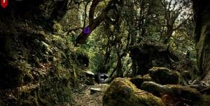 Jouer à Amazon haunted forest